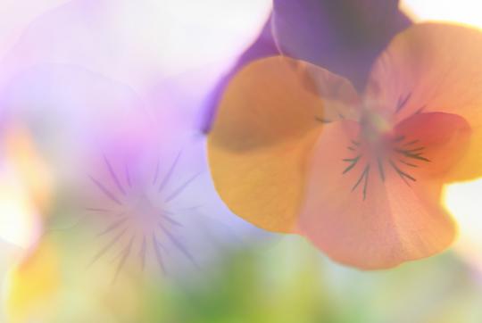 春光.jpg